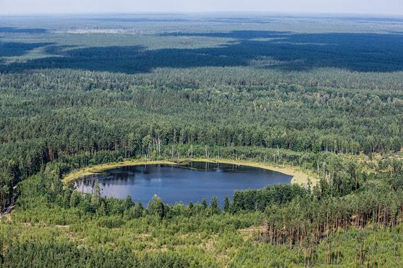 normal o1 Минприроды предлагает бизнесу брать под охрану леса