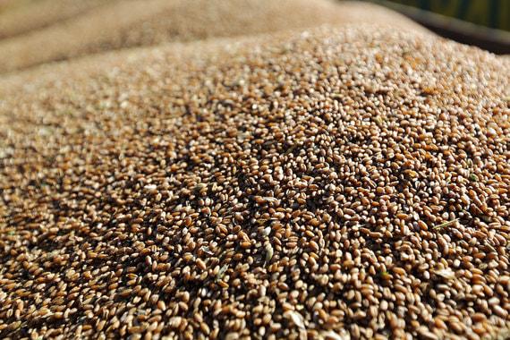 Блокчейн будет охранять зерно для Мосбиржи