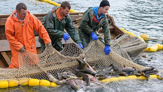 normal 1q13 Инвестиции в рыбную отрасль достигнут 613 млрд рублей