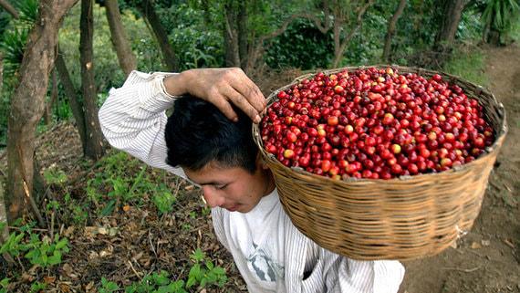 normal 1ttg Биржевые цены кофе подскочили на четверть