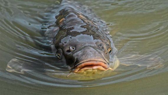Миллиардер Араз Агаларов займется выращиванием рыбы