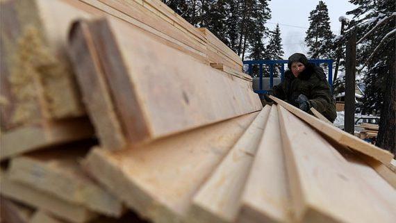 Для борьбы с незаконными вырубками лесов чиновники хотят доработать лесной ЕГАИС