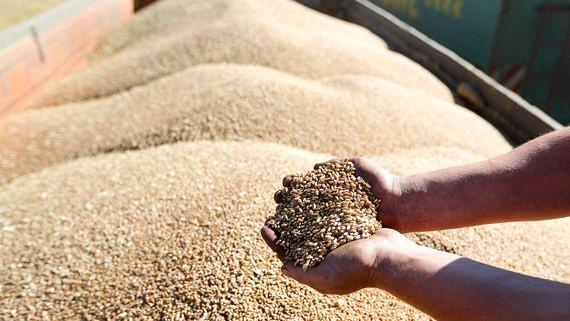 Минсельхоз хочет ограничить экспорт зерна