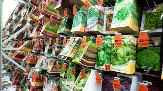 Продажи семян и товаров для дачи взлетели из-за коронавируса