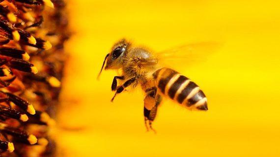 «Билайн» занялся спасением пчел
