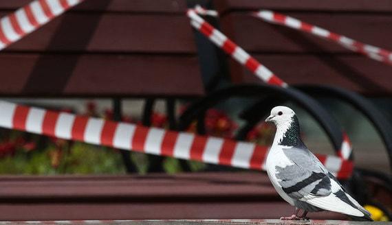 Аналитики назвали районы Москвы с наиболее высоким риском заражения коронавирусом