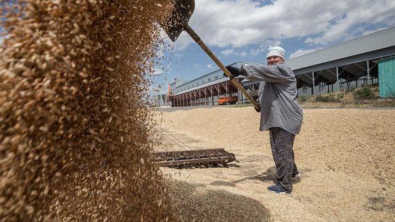 Квота на экспорт зерна в новом сезоне может не применяться
