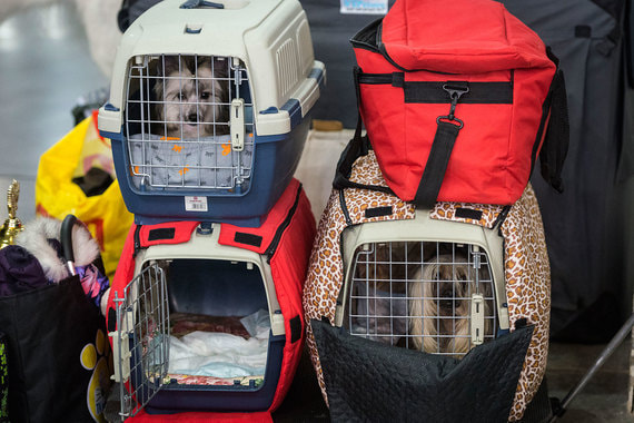 «Аэрофлот» рассказал о сорванной попытке массовой контрабанды собак