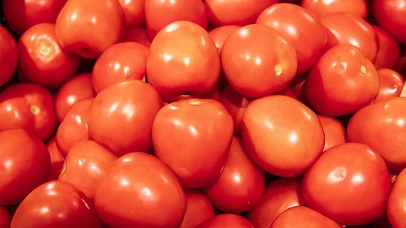 Россия рассмотрит отмену квот на импорт турецких помидоров