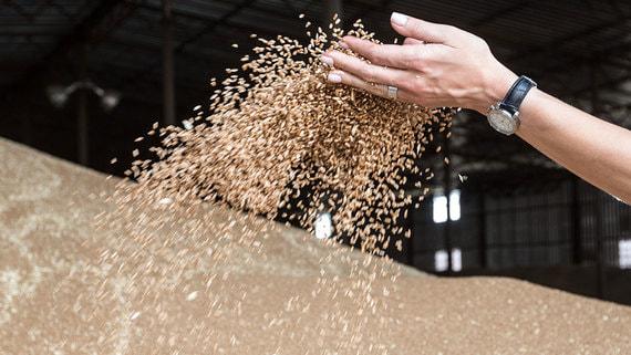 Свиноводы и кондитеры предлагают ввести экспортную пошлину на зерно