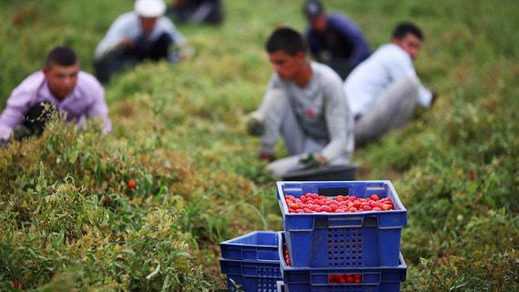 Неформальная занятость растет вместе с экономикой